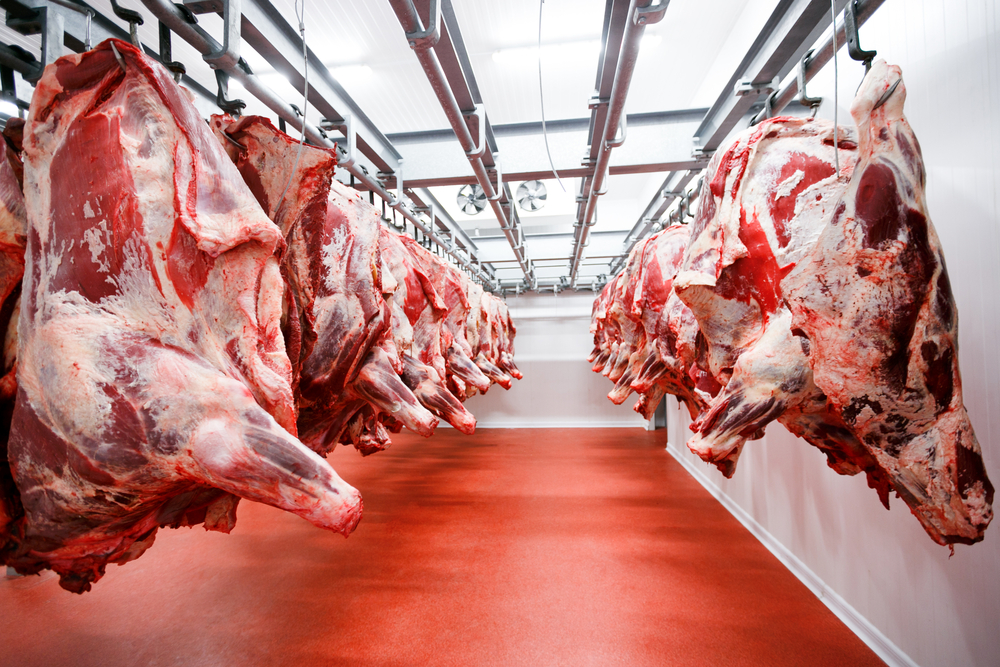 Proces køling til slagteri